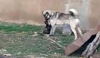 Kedi ile köpeğin kıskandıran dostluğuKedi ile köpeğin kıskandıran dostluğu