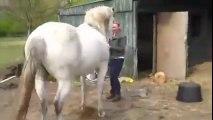 At Tepmesi ile Kafası Göçen Kadın