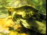 Tortues aquarium douai