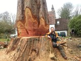 Big tree gets cut down with a chainsaw