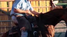 Horses Running, Playing and Jumping - Horses for Kids - Livestock