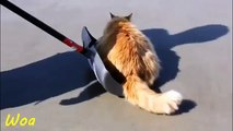 Cats enjoy playing snow - Cutes Cat Moment   Cat Cute Video