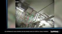 Des expériences sur des singes dans le sous-sol d'un hôpital parisien (vidéo)