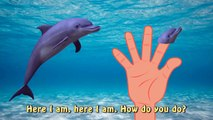 Sea Animal Finger Family Nursery Rhyme   Whale Orca Killer Whale dolphin octopus Daddy Finger
