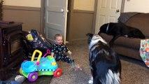 Ce bébé part dans un fou rire hystérique en voyant son chien