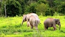 Elephants for Kids - Elephants Playing - African Animals