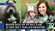 Pit bull attack  pit bull attacks, pit bull saves, sex with pitbull compilation