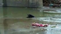 Zavallı köpek donmuş nehirde mahsur kaldı