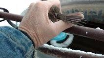 Le sauvetage d'un oiseau collé par le froid sur une rambarde gelée !