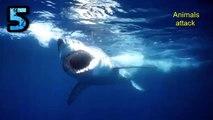 Top 5 Most Dangerous Shark Attacks Beaches-Highest Shark Attack Beaches    Worst Shark Attack (HD)