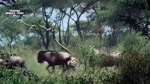 Most Amazing Wild Animal Attacks - Cheetah vs Buffalo - Lion, Giraffe - Animal Attacks