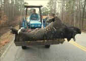 Chasse au sanglier géant | Top 10: la plus grande chasse au sanglier