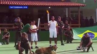 اولمپک مشعل روشن کرنےکی تقریب،جیگوارکوگولی مارکرہلاک کردیا گیا-psWjzx2zZbE
