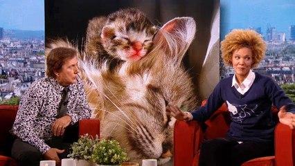 Christophe le véto : l'éducation des chats #AmandaF2