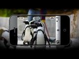 TechnoBuffalo - Rumor Round Up: Photo Revolution And More iPhone 5 Rumors(!)