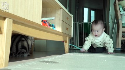Will Walking Baby become friends with the Cats? 걷기 시작한 아기집사(육냥이)와 고양이들 친해질까
