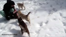 Siberian Husky Puppies Playing in Snow-0RlQn1yYVLE