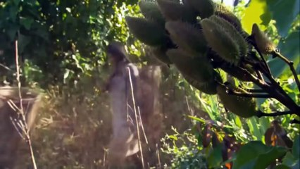 Strange Secrets In the Amazon RainForest  2017 HD