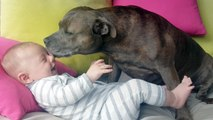 Best Buddies! Adorable Pitbull and Baby
