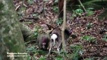 Un rapport sexuel entre un singe et une biche observé au Japon