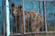 O Zoo Mais Triste Do Mundo: Animais Abandonados Para Morrer Num Zoo Da Arménia!