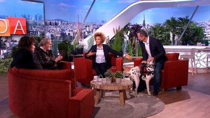 #AmandaF2 Christophe le véto : l'hygiène des chiens