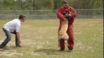 Soldier Adopts Dog That Saved His Life  National Geographic