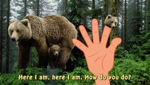 Finger Familly Daddy Finger Grizzly Forest Animal | Bear Cartoon | Nursery Rhymes For Children