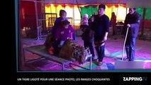 Chine: Un tigre ligoté pour une séance photo, les images choquantes (Vidéo)
