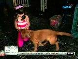 "24 Oras: Asong bida sa ""Ang Aso ni San Roque"", dating bomb-sniffing dog"