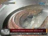 24Oras: Igat na may habang 50 pulgada, nahuli sa ilog sa Sto. Domingo, Ilocos Sur