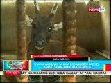 BP: Usa na kabilang sa mga endangered species, nahuli sa Bacarra, Ilocos Norte