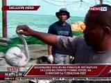 SONA: Sako-sakong pangolin, posibleng tinangkang ipuslit ng mga Chinese sa Tubbataha