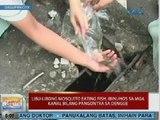 UB: Libu-libong mosquito eating fish, ibinuhos sa mga kanal sa Dagupan bilang pangontra sa dengue