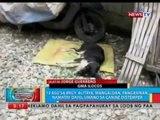 BP: 13 aso sa Pangasinan, namatay dahil umano sa canine distemper