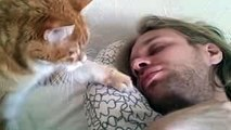 Cute Pets Waking Up Their Owners ⏰ Best Alarm Clock Ever!  Funny Pets