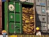UB: Sako-sakong bigas sa warehouse ng Bureau of Customs-Cebu, nagsisimula nang mabulok