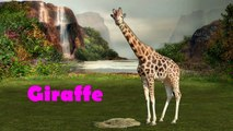 Compilation Learn Wild Animals Names vesves Sounds   Wild Zoo Animals Names   Wild Animals, Far