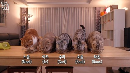 Which Cat Can Eat 4 Bowls of Food? | 4그릇을 먹는 대식냥은 누구
