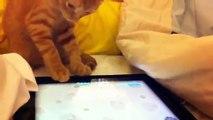 Un chaton tente de capturer une souris virtuelle, mais il ne parvient qu'à capturer mon coeur.