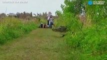 Un alligator géant observé dans une réserve naturelle en Floride