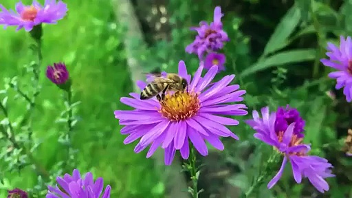 Honey Bee and Flower nature beauty