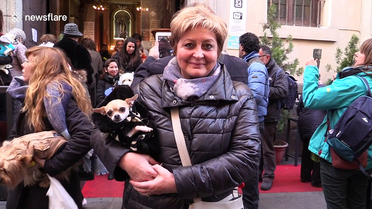 Cats and dogs blessed in Spanish church