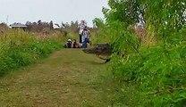 Des touristes croisent un alligator géant