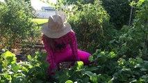 Pregnant Pink Spidergirl Watermelon W Doctor Spiderman Fun Superhero Kids In Real Life In 4K