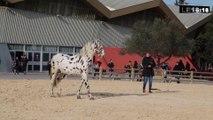 """Le 18:18 - Avignon : 100000 visiteurs et 1200 chevaux attendus pour """"Cheval Passion"""""""