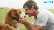 'A Dog's Purpose' Producers Say Dog Was Not Forced To Complete Scene