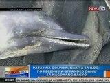 NTG: Patay na dolphin, nakita sa ilog sa Laoag City, Ilocos Norte