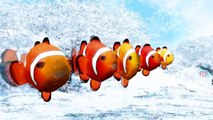 Finger Family Nemo Cartoon Nursery Rhymes For Children | 3D Animated Fish Rhymes |