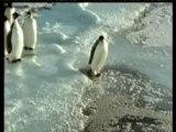 Pingouin-humour